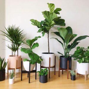 Các loại cây cảnh phù hợp trồng chậu xi măng nhẹ