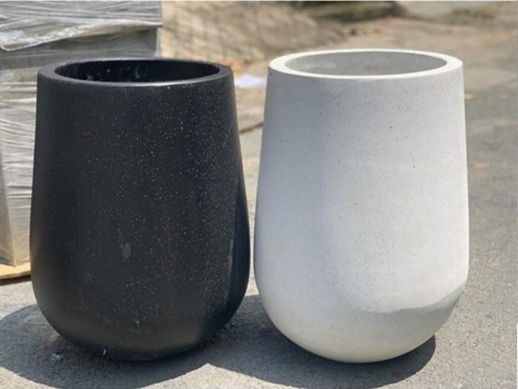 2 chậu củ tỏi trắng đen, dòng màu cơ bản basic đẹp thích hợp trồng cây cảnh